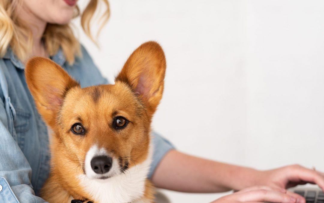 14 Facts Every Corgi Owner Should Know