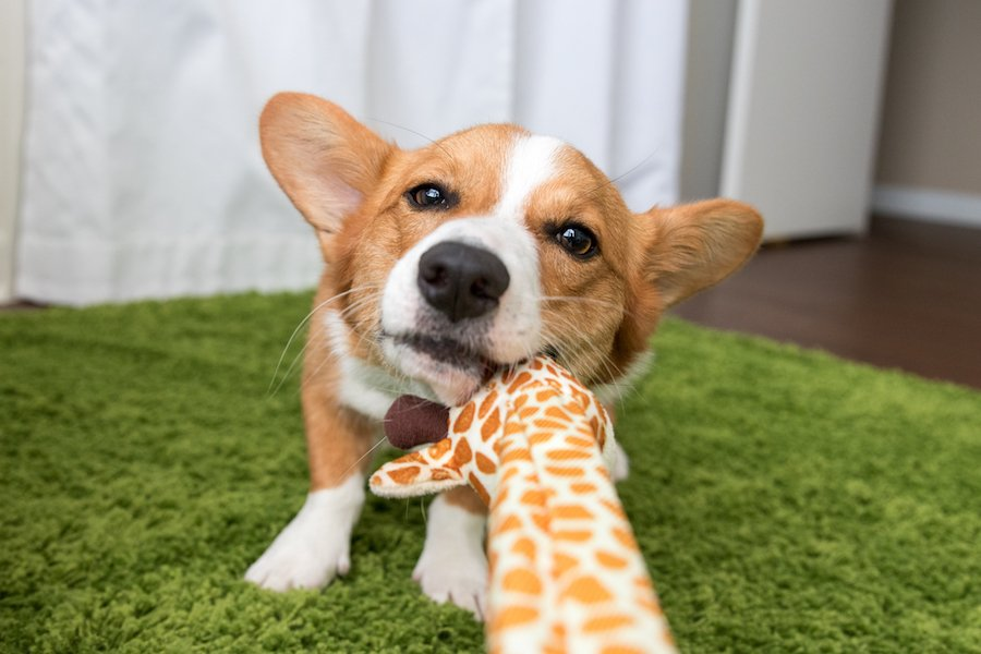 The Best Dog Items On Amazon