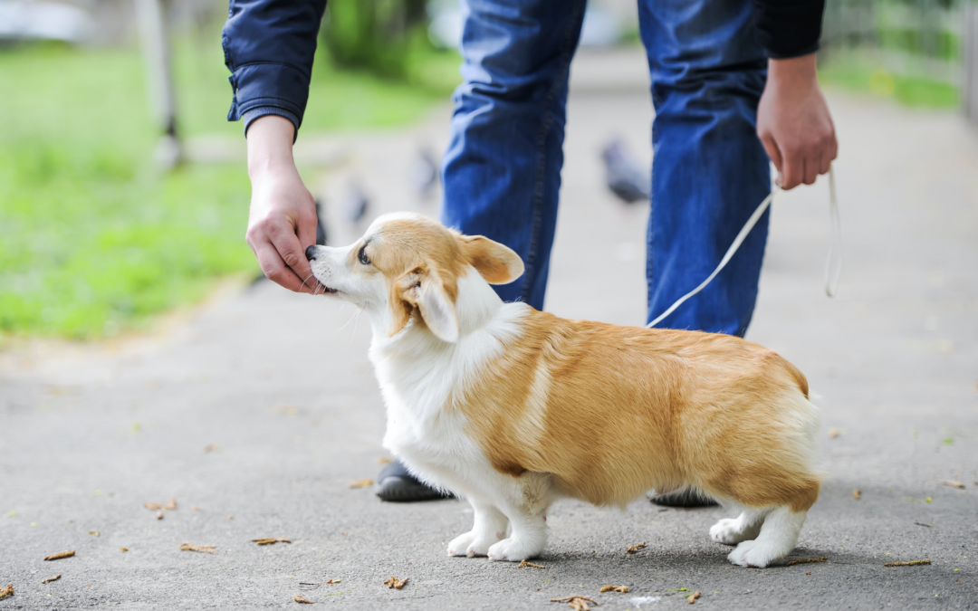 The Do's and Don'ts of Puppy Socialization