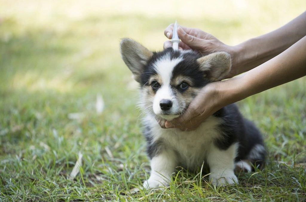 Flea and Tick Prevention: A Dog Owners Options
